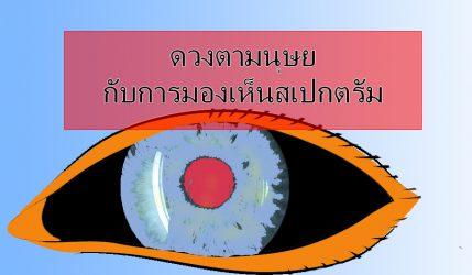 ดวงตา มนุษย์กับการมองเห็นสเปกตรัม