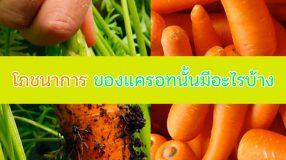 โภชนาการ ของแครอทนั้นมีอะไรบ้าง